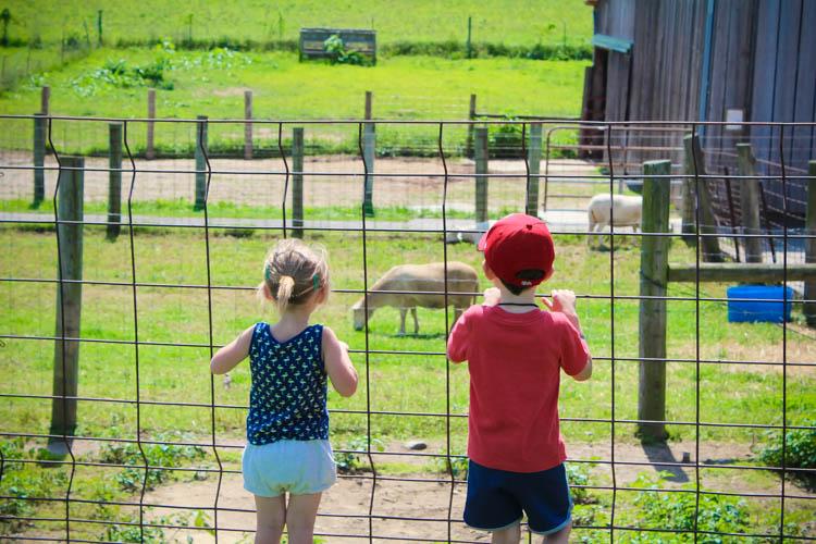 Hidden Gems, Cincinnati, Gorman Heritage Farm